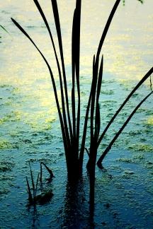minimal reeds