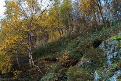 autumnvista