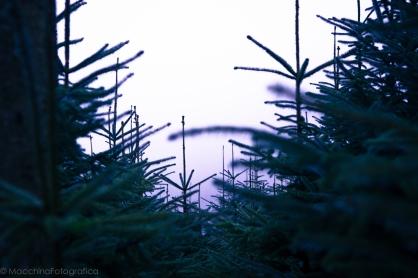 pineswm