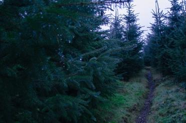 wintertrail2