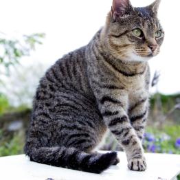 cat2-1