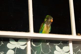 bird2-1
