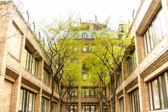courtyardtree2-1