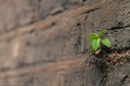 wallgrowth-1