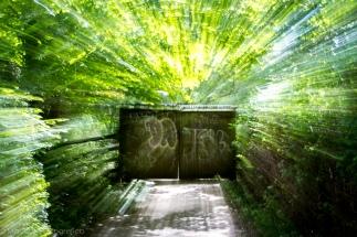 greendoor-1