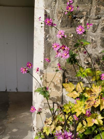wallflowers-1